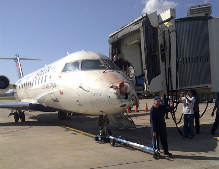 Bombardier CRJ200ER Bird Strike
