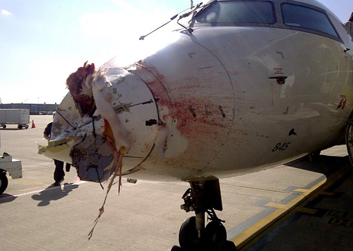 Bombardier CRJ200ER Nose Cone Damage due to Bird Strike